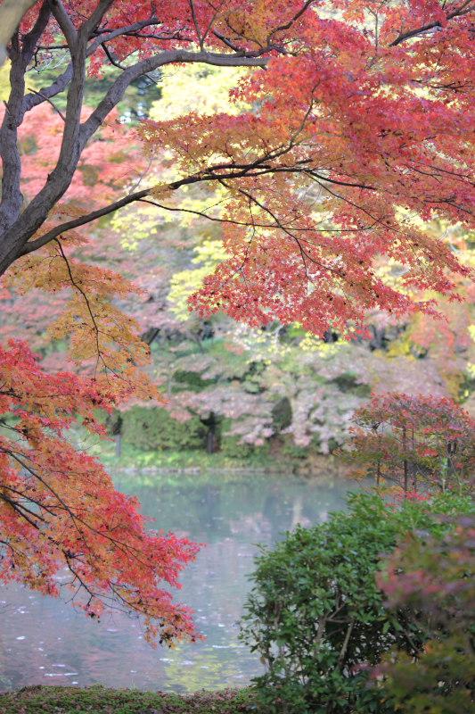 紅葉 2012  京都府立植物園_f0021869_22462231.jpg