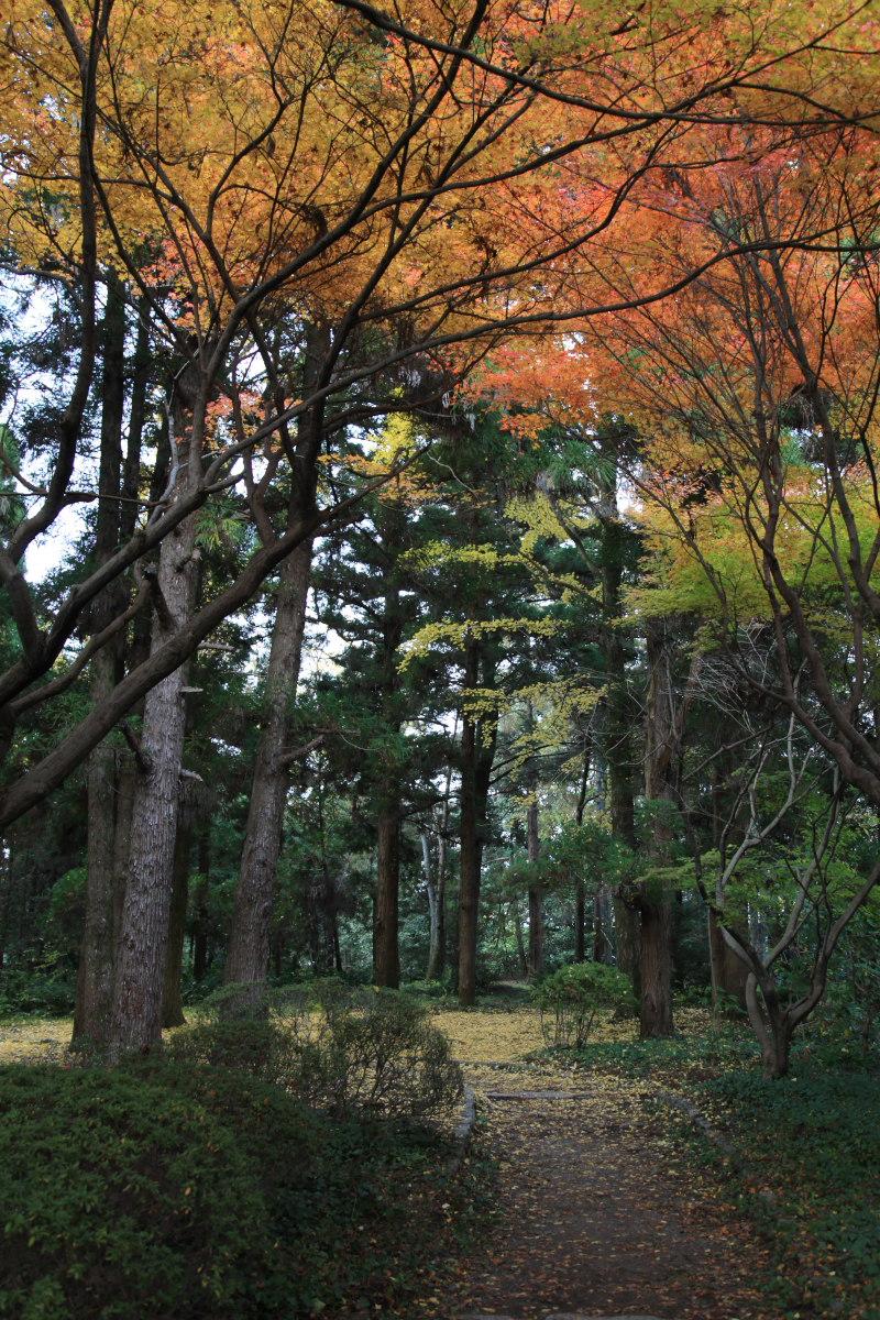 紅葉 2012  京都府立植物園_f0021869_22484280.jpg
