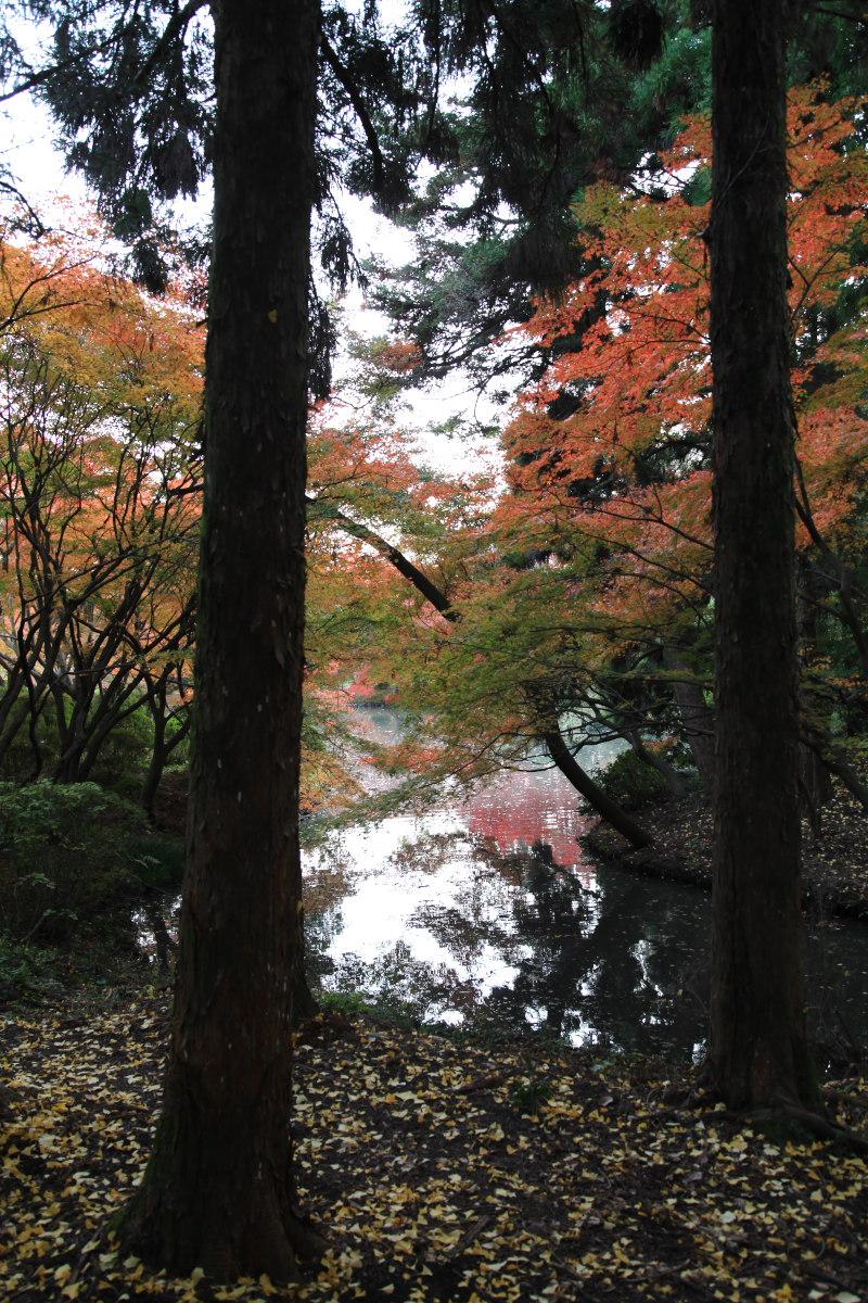 紅葉 2012  京都府立植物園_f0021869_22495246.jpg