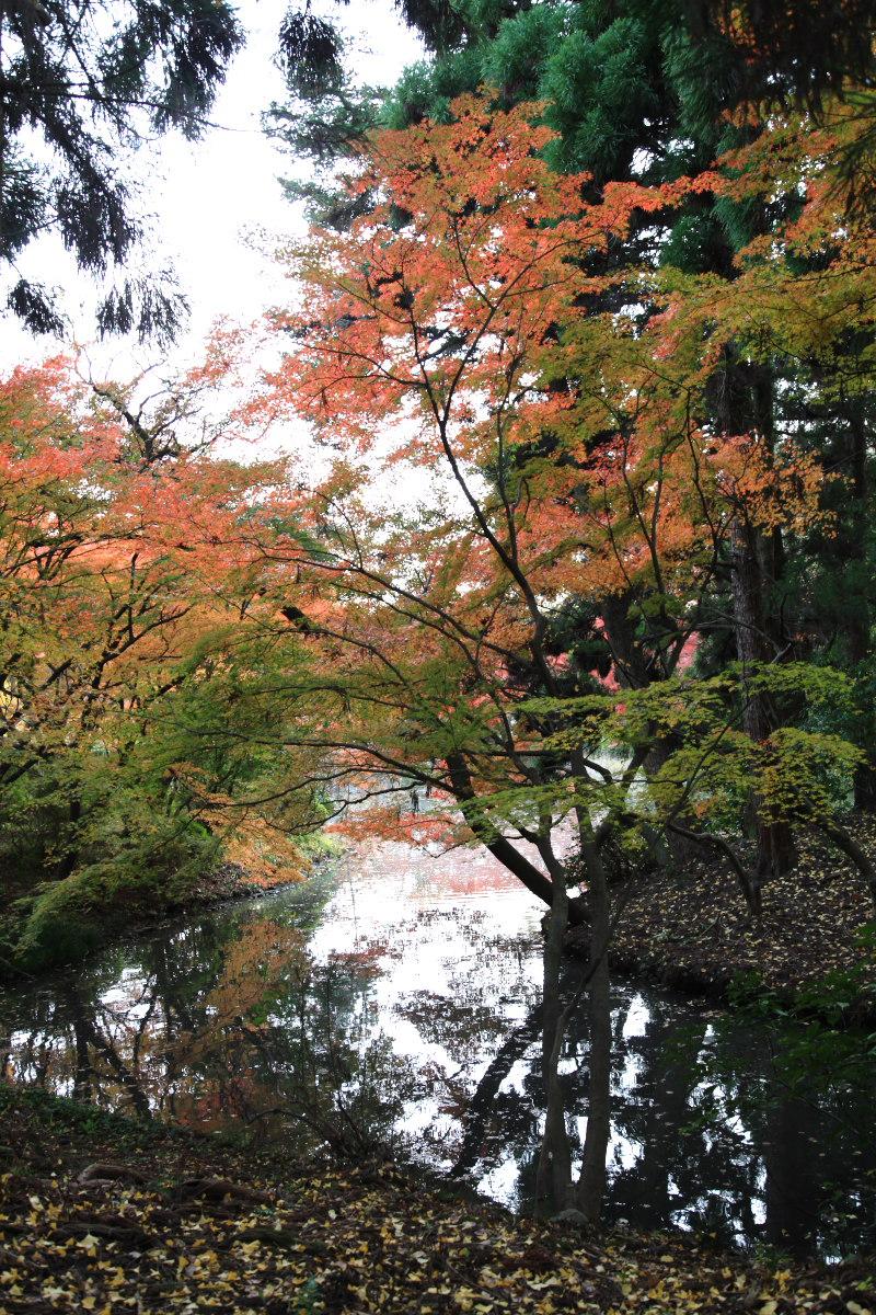 紅葉 2012  京都府立植物園_f0021869_22532528.jpg
