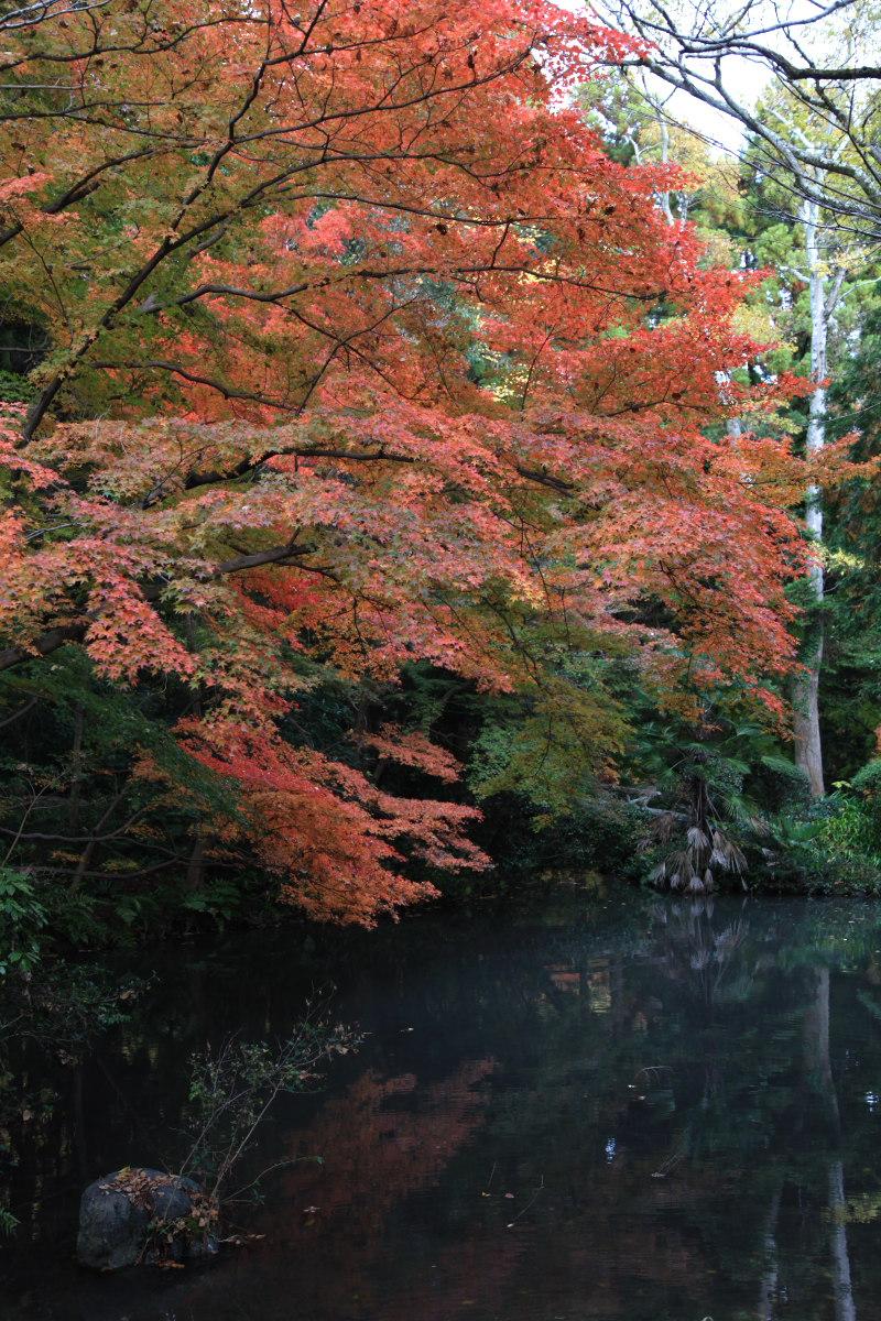 紅葉 2012  京都府立植物園_f0021869_22583249.jpg