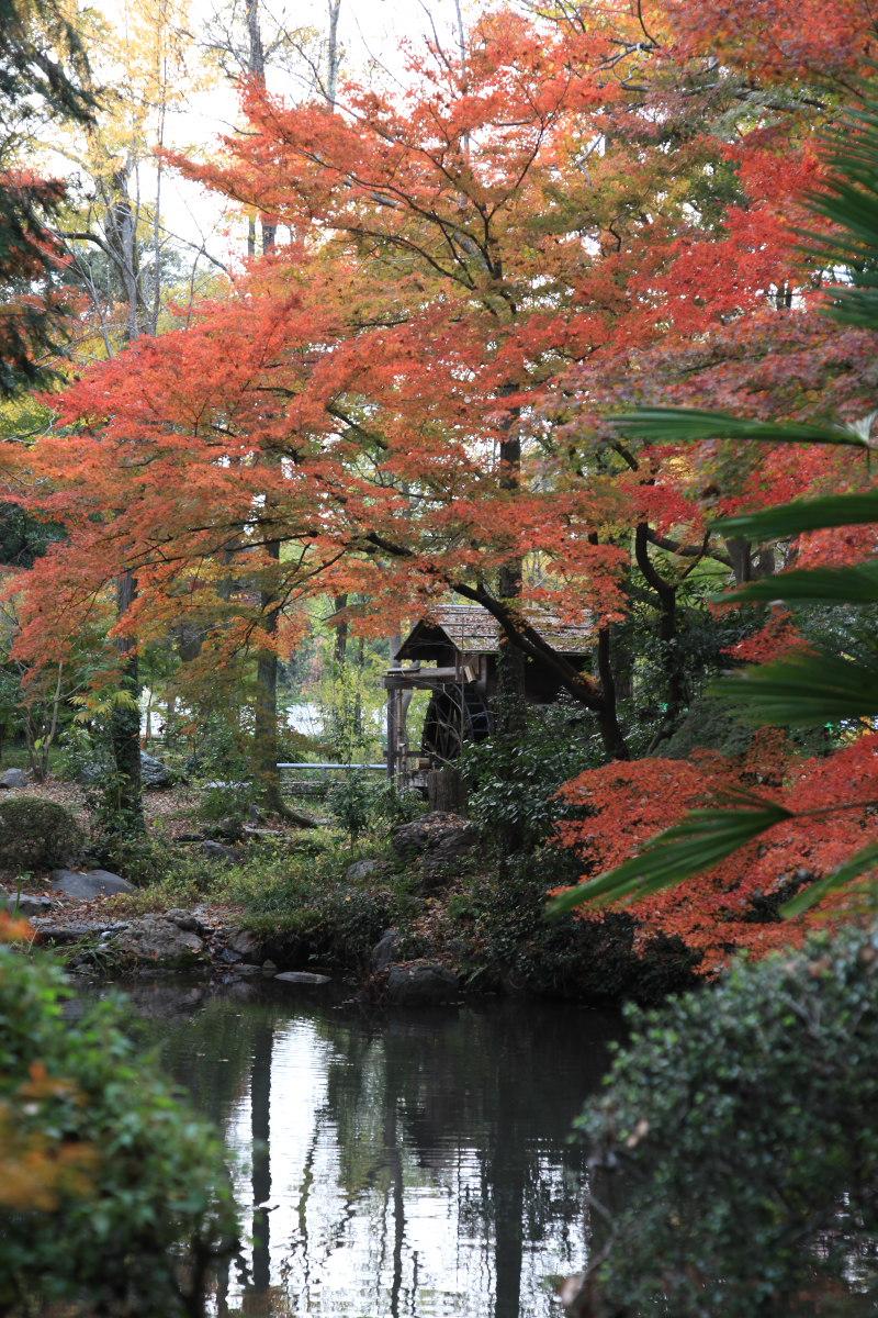 紅葉 2012  京都府立植物園_f0021869_2311034.jpg