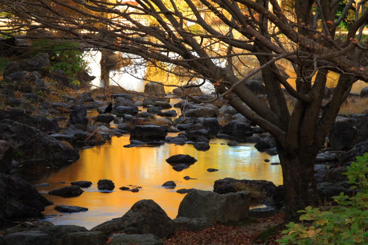 DIGIC 4 de 紅葉 2012 IN 万博公園_f0021869_23142889.jpg