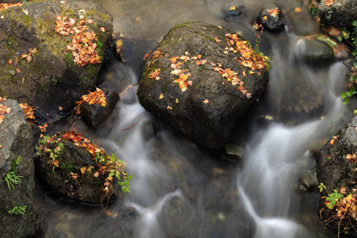 DIGIC 4 de 紅葉 2012 IN 万博公園_f0021869_23172145.jpg