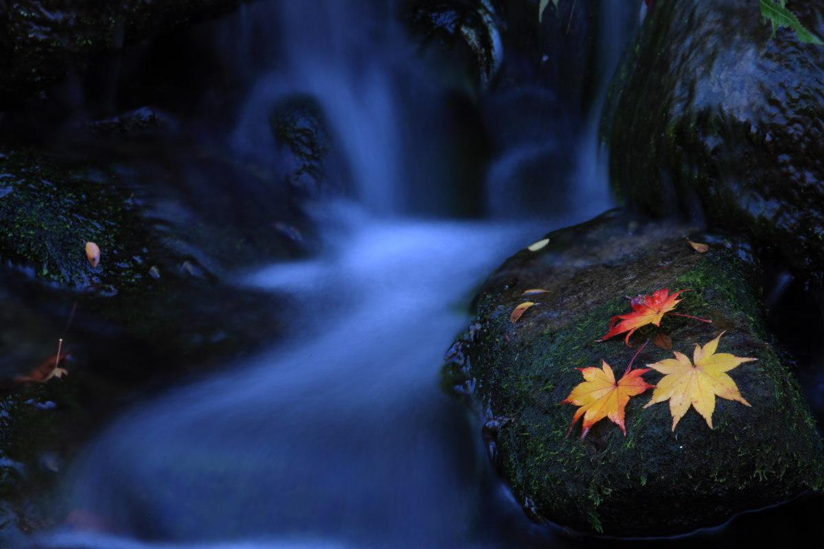 DIGIC 4 de 紅葉 2012 IN 万博公園_f0021869_23241619.jpg