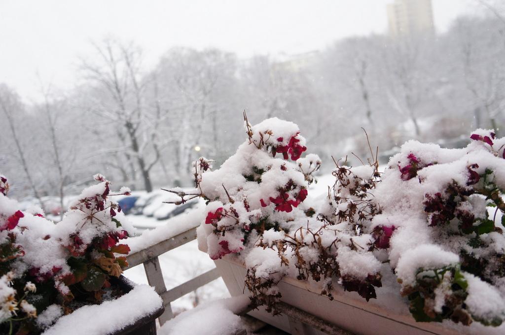 ベルリン、真っ白です。_c0180686_6162161.jpg