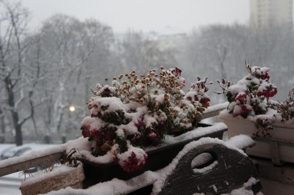 ベルリン、真っ白です。_c0180686_619533.jpg