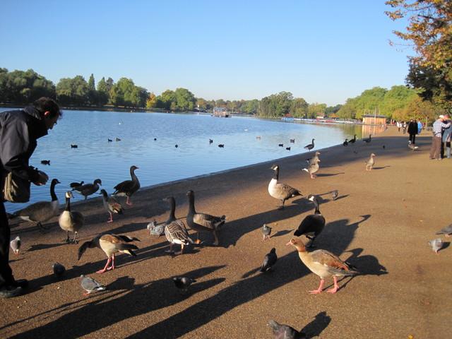 6日目-1 朝のハイドパーク散歩、出会った人は・・・_f0100593_10355395.jpg