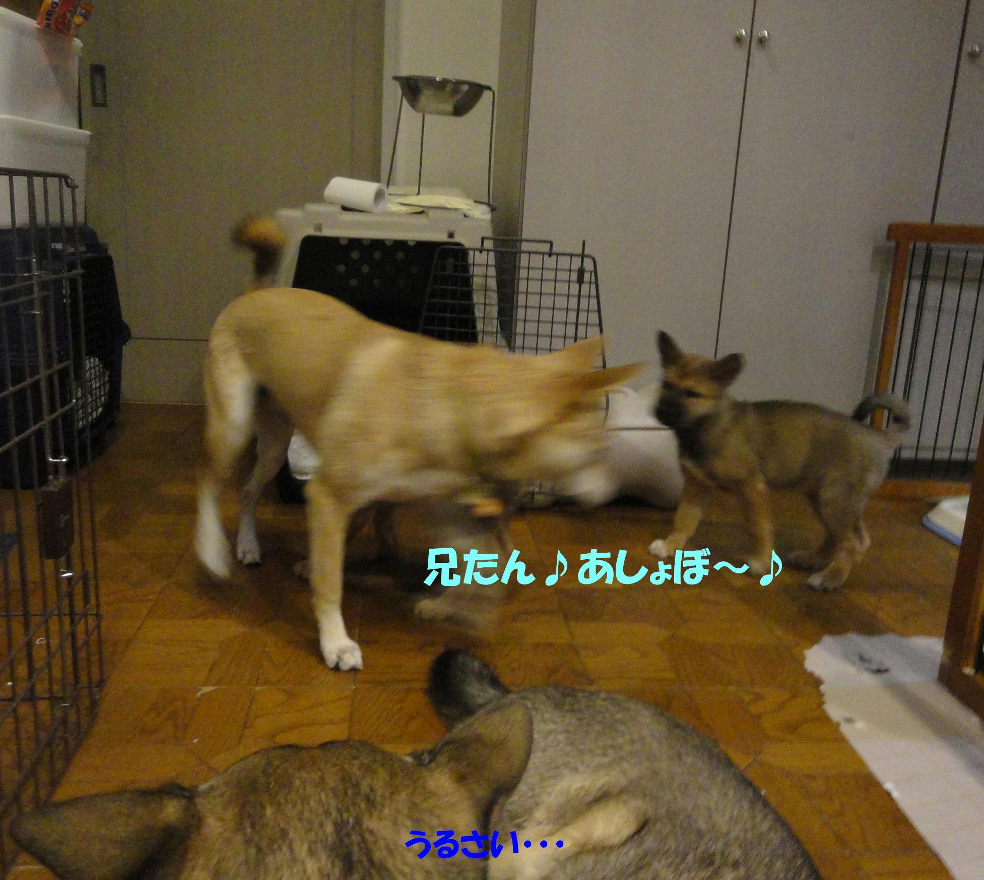 b0207320_216153.jpg
