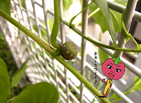 宇宙イモ収穫_d0156336_23224054.jpg