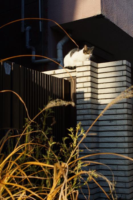 【NEX-7】 標準レンズの選択  スカイツリー・押上〜京島 実写編_c0035245_137955.jpg