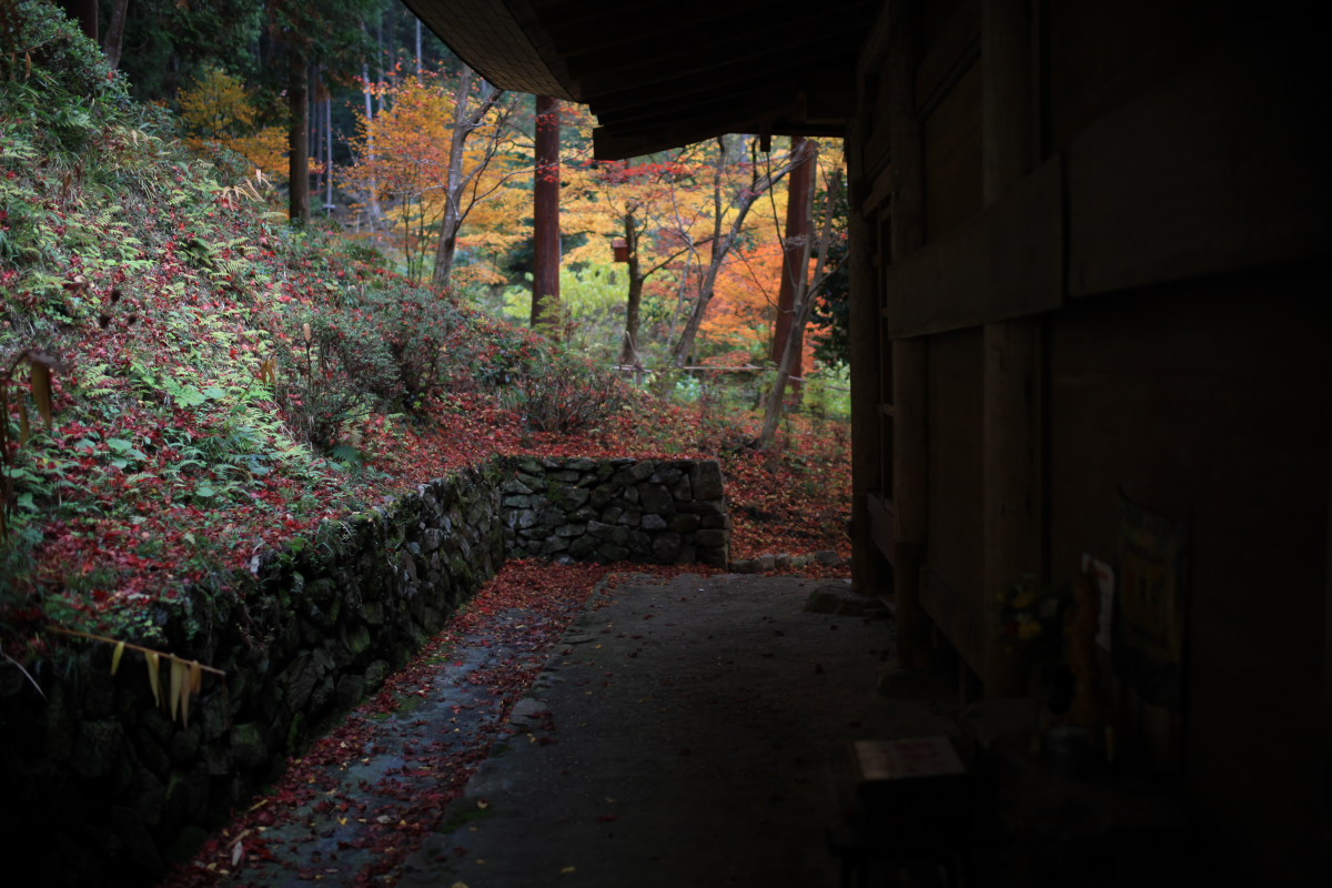 Distagon de 紅葉 2012 IN 丹波_f0021869_23595363.jpg