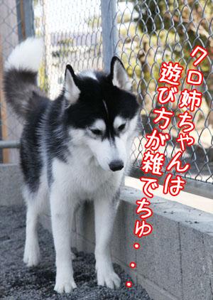 c0161772_0115423.jpg
