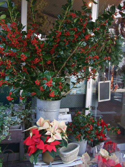 オークリーフ(クリスマス一色)_f0049672_9225492.jpg