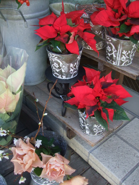 オークリーフ(クリスマス一色)_f0049672_923265.jpg