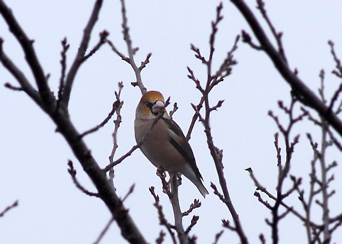 いろいろ野鳥_e0254493_1113496.jpg