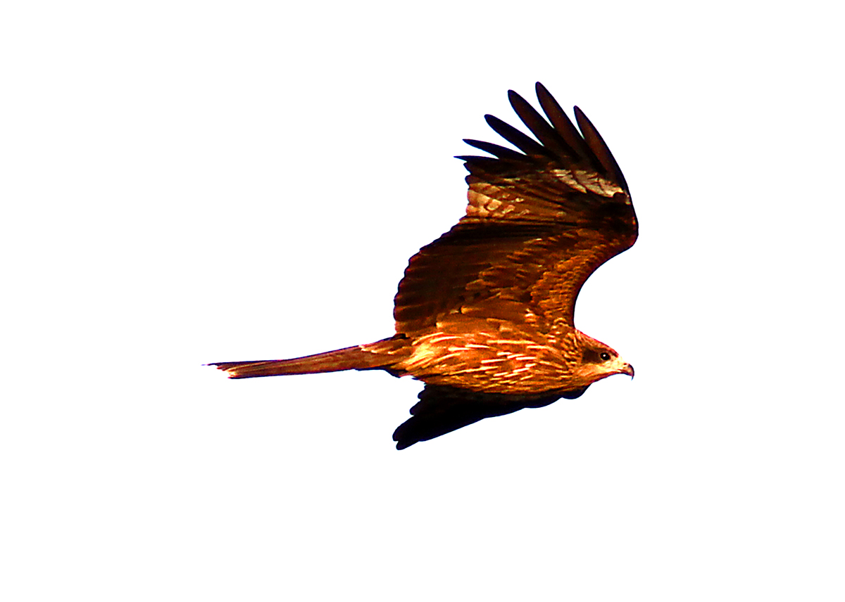 いろいろ野鳥_e0254493_112359.jpg