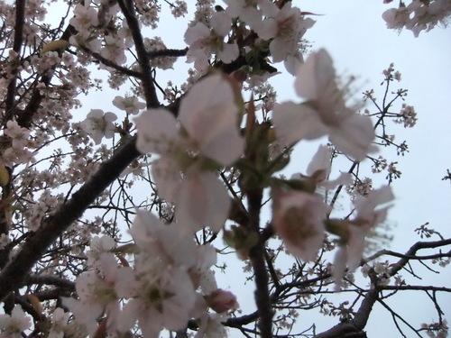 熱海の桜、箱根の紅葉_f0101201_21123930.jpg