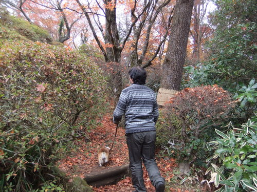 熱海の桜、箱根の紅葉_f0101201_2125056.jpg