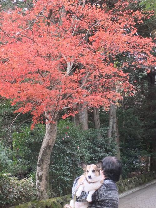熱海の桜、箱根の紅葉_f0101201_21285648.jpg