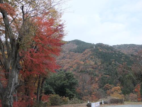 熱海の桜、箱根の紅葉_f0101201_2131401.jpg