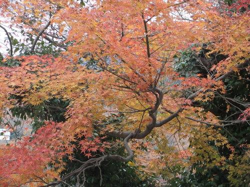 熱海の桜、箱根の紅葉_f0101201_21324329.jpg
