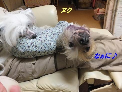 f0179203_8423998.jpg