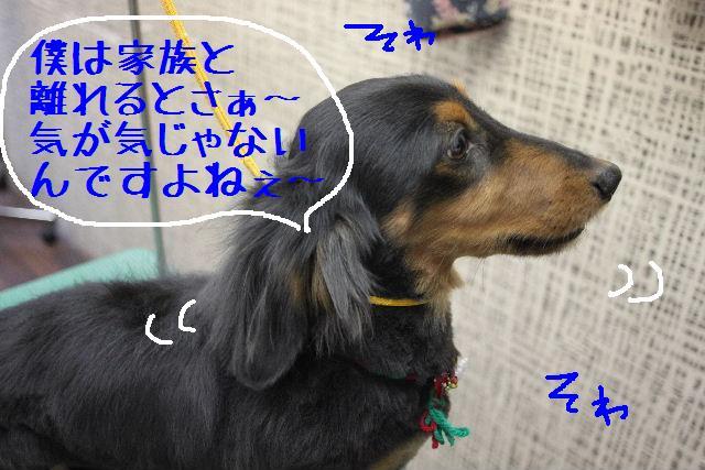 b0130018_16564485.jpg