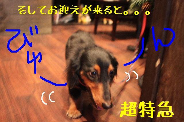 b0130018_16565056.jpg