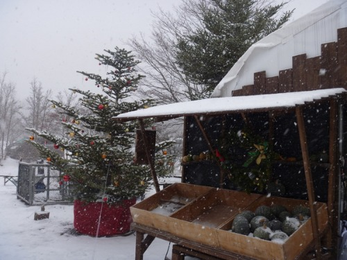 雪を楽しむ_b0174425_21531059.jpg