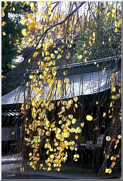 晩秋の深大寺(東京都)_d0123528_13462755.jpg