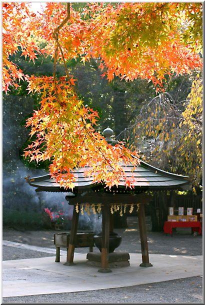 晩秋の深大寺(東京都)_d0123528_1355936.jpg