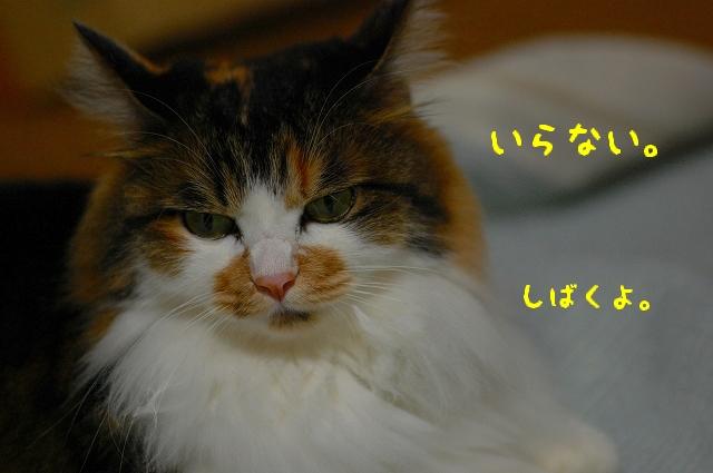 c0181639_2256318.jpg