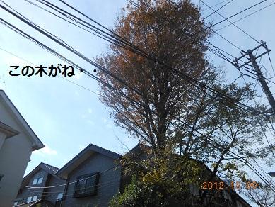 c0206342_16103249.jpg