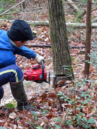 木を切る_d0231263_847232.jpg