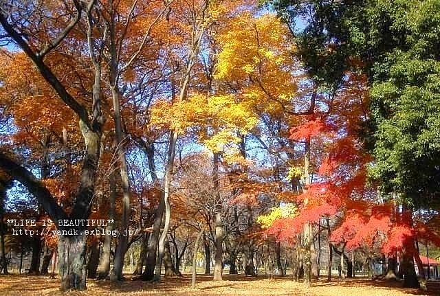 ラスト紅葉2012_d0083623_0235279.jpg