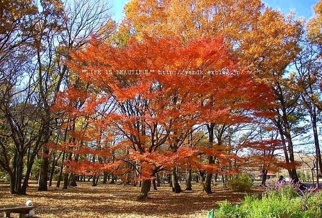 ラスト紅葉2012_d0083623_026214.jpg
