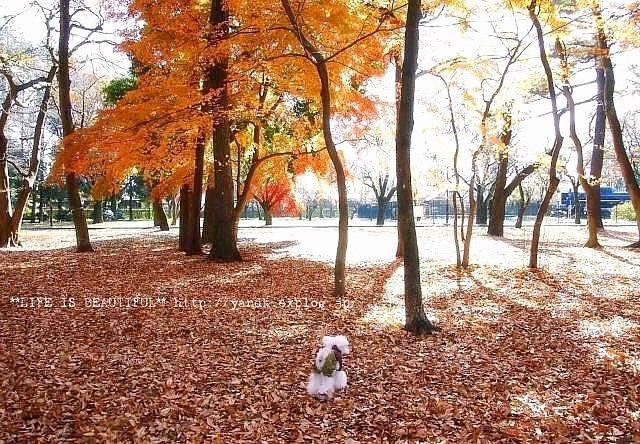 ラスト紅葉2012_d0083623_0365534.jpg