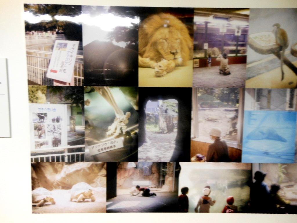 1911)「円山動物園アートアニュアル アニマルフォトストリート」地下鉄円山 11月19日(月)~3月31日(日)_f0126829_23442084.jpg