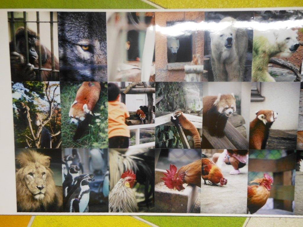 1911)「円山動物園アートアニュアル アニマルフォトストリート」地下鉄円山 11月19日(月)~3月31日(日)_f0126829_23512632.jpg