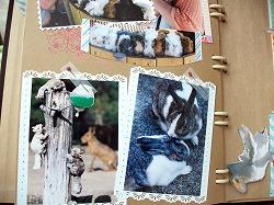 動物園アルバム&消しゴムハンコに挑戦!_d0189735_11454563.jpg