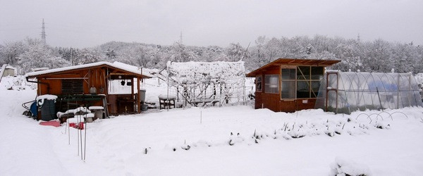 新雪とウンチ_c0063348_7451826.jpg