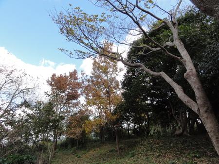 H24年12月度うみべの森を育てる会運営委員会_c0108460_175220100.jpg