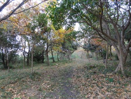 H24年12月度うみべの森を育てる会運営委員会_c0108460_17533542.jpg