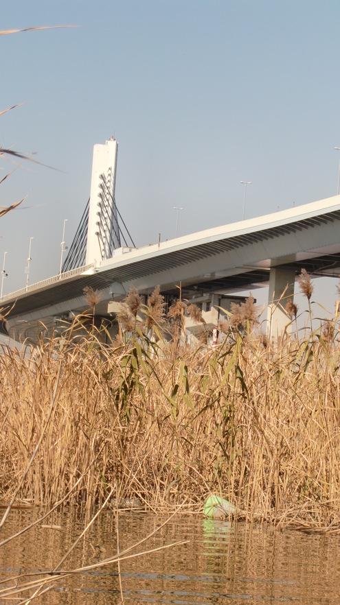 12月8日パープ橋まで_c0249569_15332711.jpg