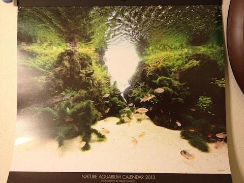 ネイチャーアクアリウムカレンダー2013_b0151584_0275639.jpg