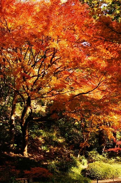 鎌倉 明月院の紅葉が見頃でした_b0145398_0323581.jpg