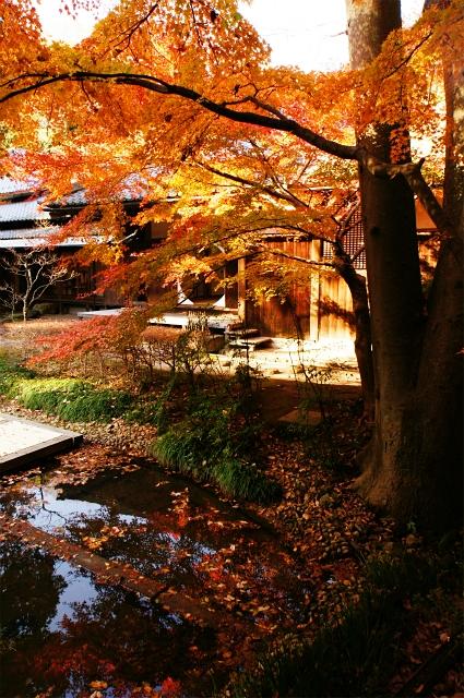 鎌倉 明月院の紅葉が見頃でした_b0145398_0332079.jpg