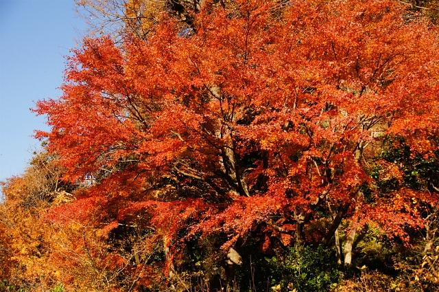 鎌倉 明月院の紅葉が見頃でした_b0145398_0364650.jpg