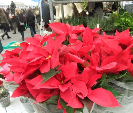ニューヨークの青空市場にも近づくクリスマス_b0007805_1018256.jpg